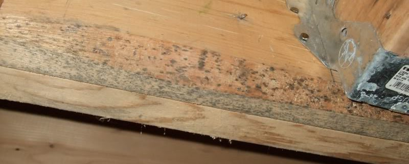 black mold on framing